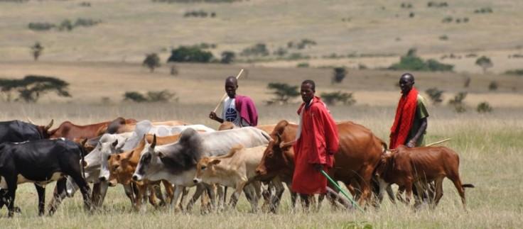 Fulani-herdsmen-with-cow-820x360